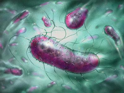 bakteria-kuman.jpg